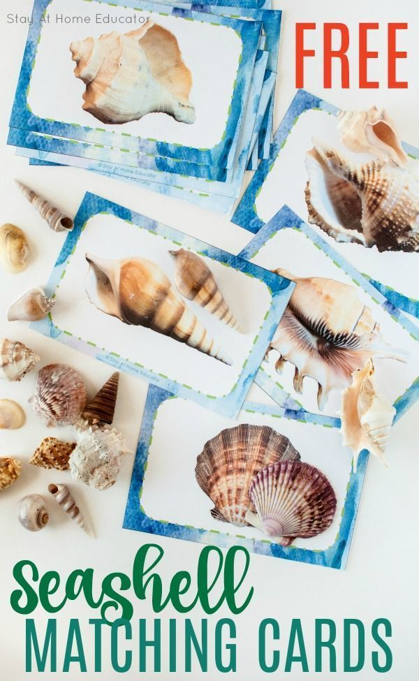 Teach Pre-Reading Skills with Seashell Matching Cards | Ocean preschool theme | ocean activities for kids | preschool literacy | seashells activities for preschoolers  Ocean Activities for Kids | Ocean Worksheet | Ocean Coloring for Kids | Ocean Activities for Toddlers | Ocean Experiments | Children's Ocean Games | Ocean Activities for Preschoolers | Ocean Projects for Kids | Ocean Science Experiments| Ocean Activities for Kindergarten