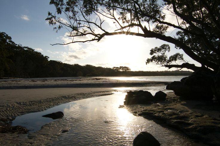 Green Patch, Jervis Bay, NSW Australia  Copyright of Jo Thom
