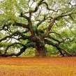 The Angel Oak Tree in Charleston, S.C. is estimated at over 1,400 years old