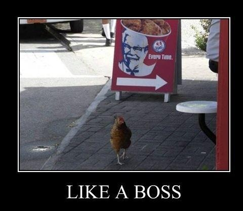 Like A Boss: Christian Meme, Same Animal, Funny Pictures, Psalms 23, Funny Stuff, Friday Funny, Keep Walks, Funny Animal, No Fear