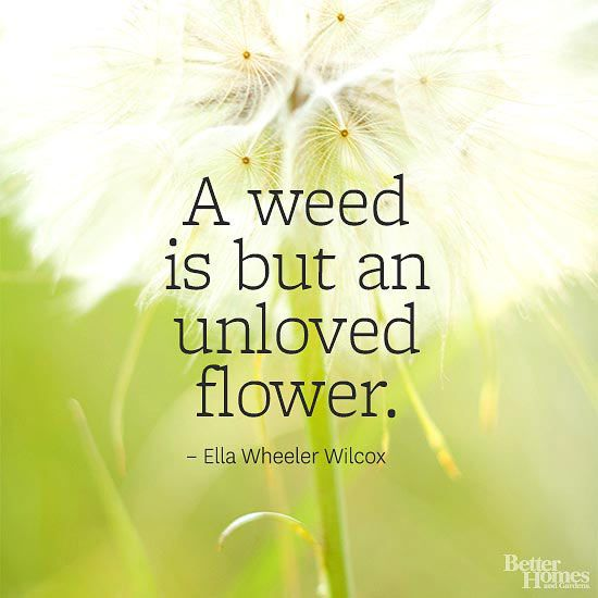 """So true! I saw a field of dandelions and it was beautiful! It's just a matter of perspective. Nugget loves to pick the """"little yellow flowers"""""""