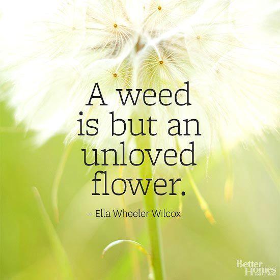 25+ Best Dandelion Quotes On Pinterest
