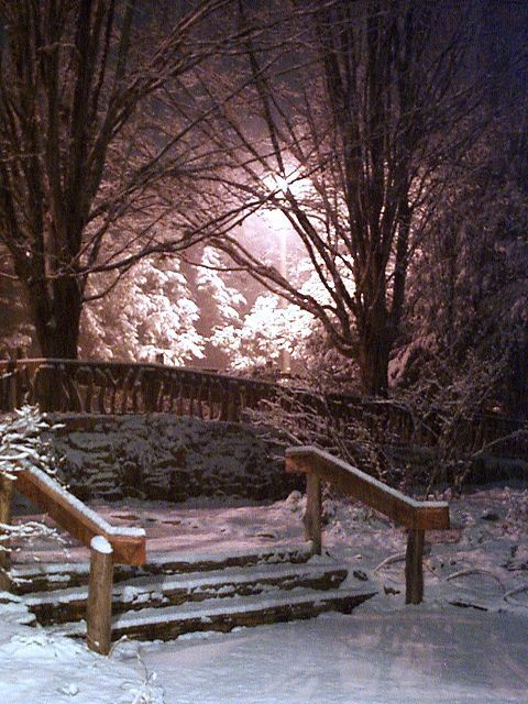 Snowy night at Botanical Gardens in Asheville. Looks like a scene from 'The Lion, the Witch, and the Wardrobe'.