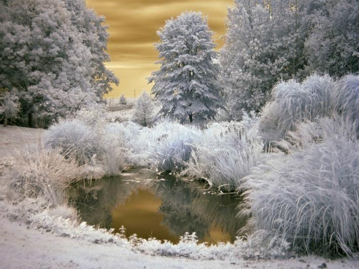 Mount Ephraim Gardens Kent Infrared Photographyeast Susflorencebackyard England