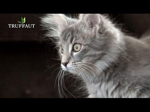 Le Chaton : choix du chaton, éducation, soins... Tout savoir ! - YouTube