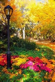 Chrysanthemums and Falling Leaves in Central Park, NYC.