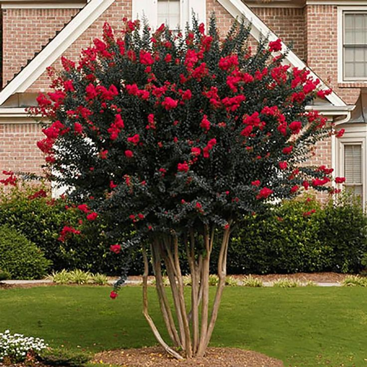 how to prune crepe myrtle bonsai