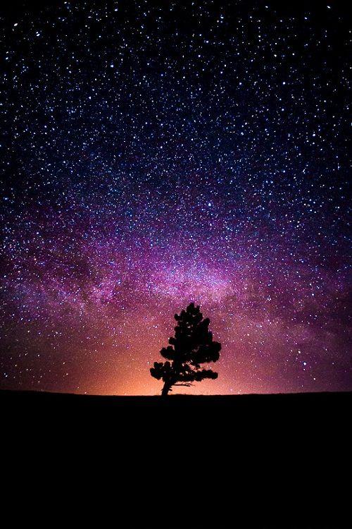 Space: Milky Way, Stars and the Tree by Arsenii Gerasymenko