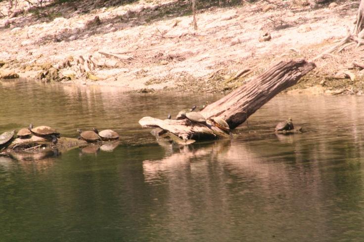 8 Best Santa Fe River Branford Fl Images On Pinterest