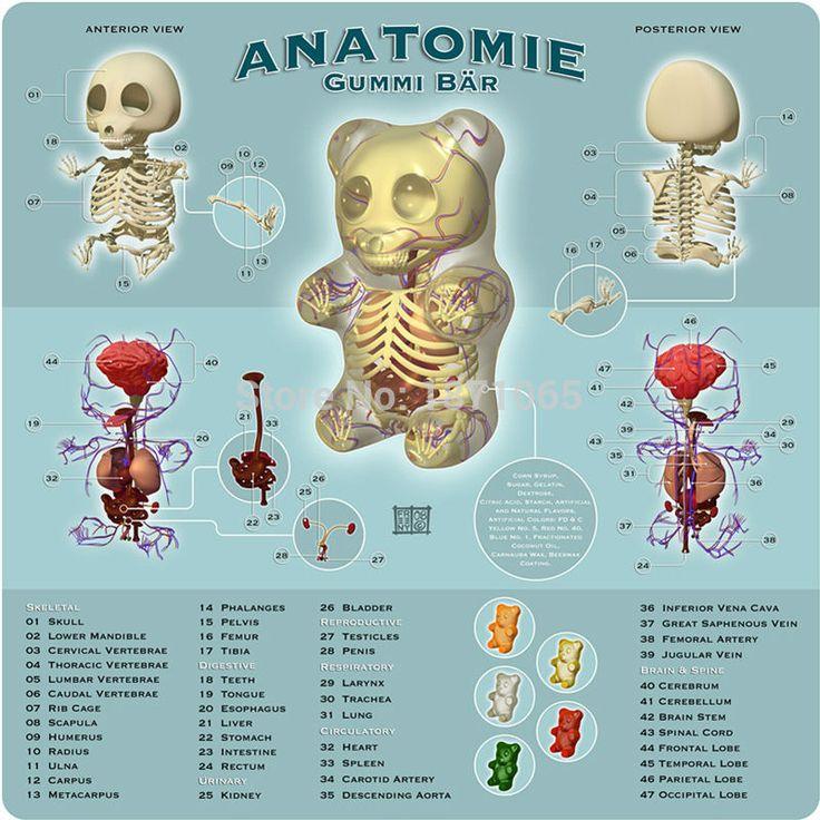 Science Toys <b>4DMASTER Anatomy</b> Model Perspective Bear ...
