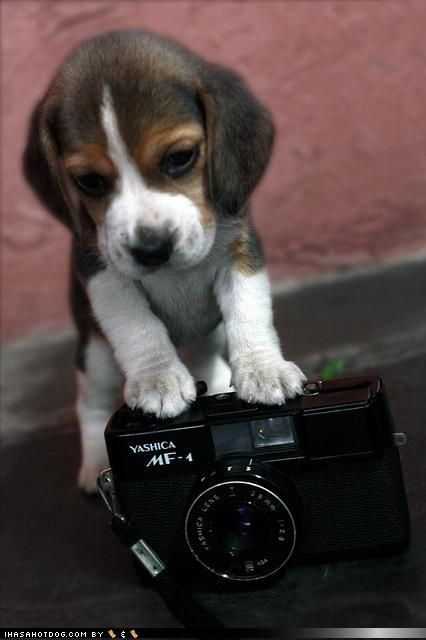 beagle!!!!---------------I'm going to take a picture of you........................................