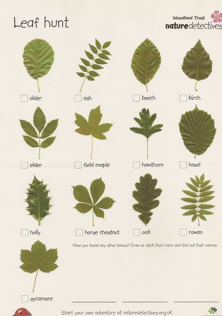 Craftsman Style Home Decorating Ideas: This Leaf Scavenger Hunt Can Engage Kids In Preschool