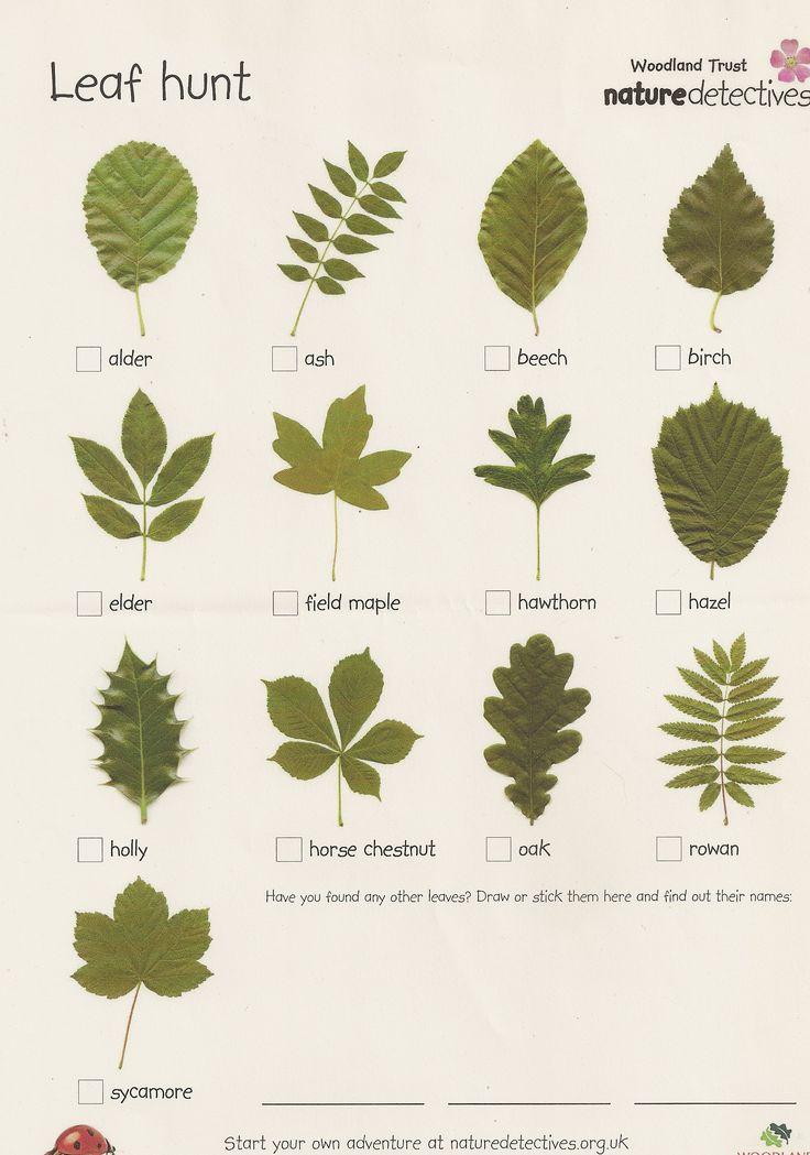 Home - i-Tree Species