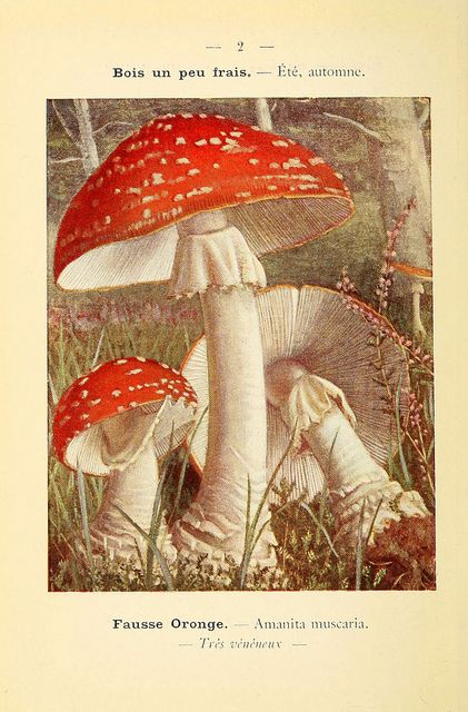 n21_w1150 by BioDivLibrary, via Flickr