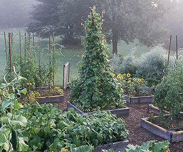 Benefit: Make Your Garden More Attractive- smaller boxes for different plants- bean teepee, sunflowers ect.