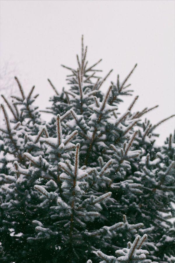 Vsco Winter Snow Tree Christmas Haileywood Wallpaper Iphone Christmas Christmas Aesthetic Holiday Lookbook