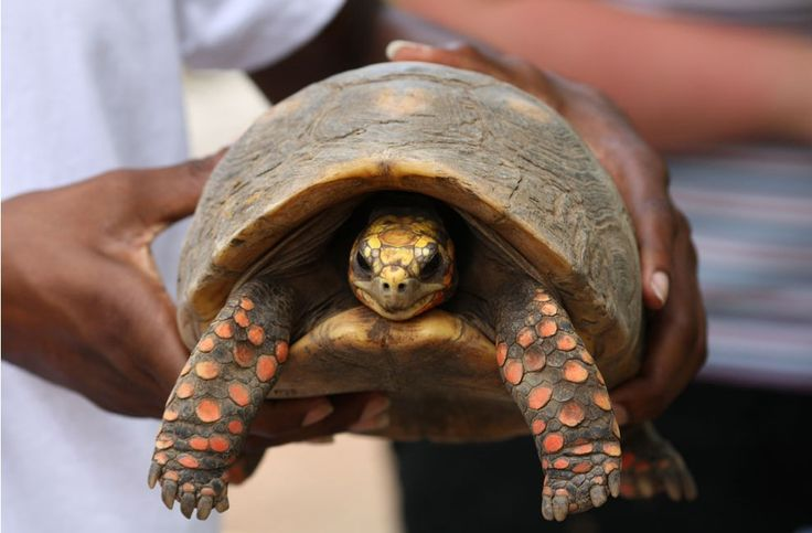 Encontraron viva en el altillo a la tortuga que perdieron en 1982