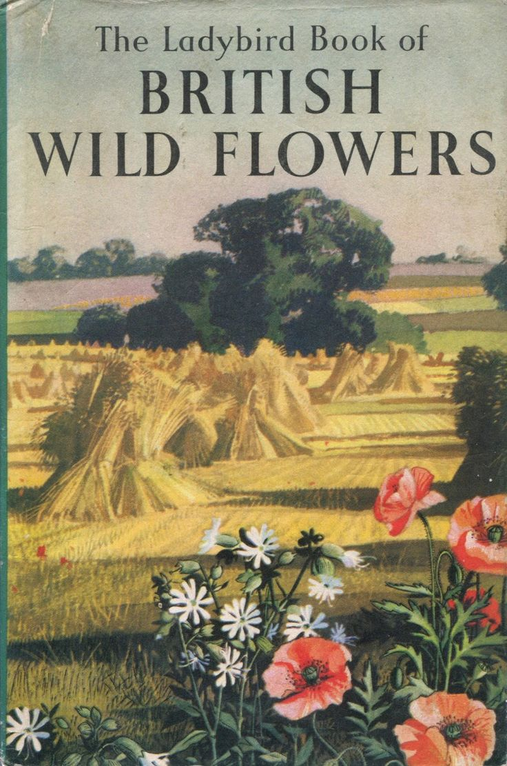 Colour childrens literature - The Ladybird Book Of British Wild Flowers By Brian Vesey Fitzgerald Colour Illustrations By Rowland And Edith Hilder Loughborough Wills Hepworth Ltd