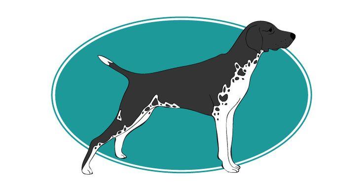 Le Braque allemand à poil court est un chien au caractère doux, sans une once d'agressivité, affectueux et équilibré offert par Assur O'Poil l'Assurance Chien. Pour plus d'informations, rendez-vous sur http://www.assuropoil.fr/