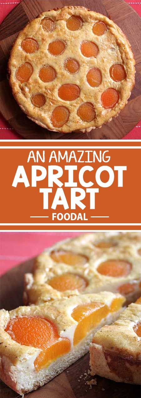 A beautiful, tasty apricot tart from Germany with a butter crust and a vanilla custard filling. It's so simple to make, you just have to try it at home! Read more and get the recipe now on Foodal.