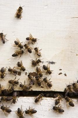 Simple Home Remedy to Get Rid of Bees