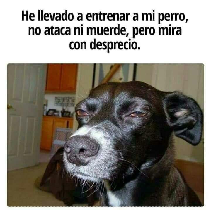 Pin De Luz Mercedes Charris Ja Uregui En Humor Memes De Animales Divertidos Memes Divertidos Perros