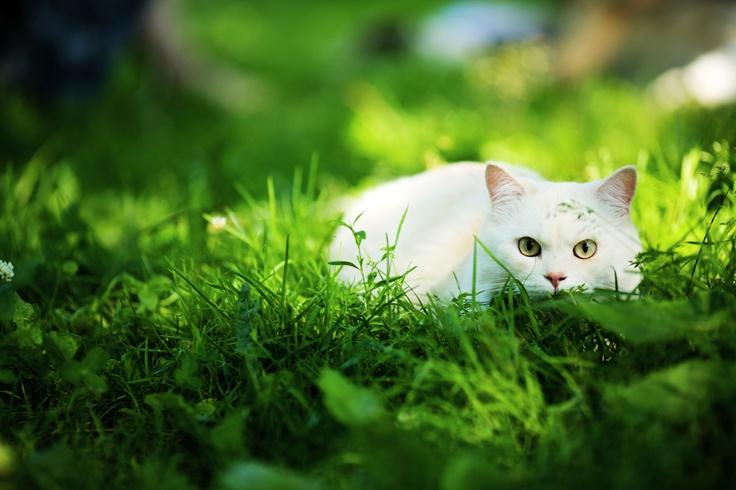 Noi pisicile iubim anotimpul cald pentru ca avem spatiu deschis de joaca. De aceea, cand prindem ocazia, studiem fiecare fir de iarba.  Postat de Jimmy