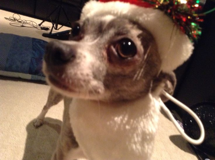 She is Santa