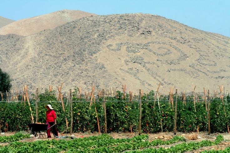Geoglifos Cerro Sagrado #pinChile #wine