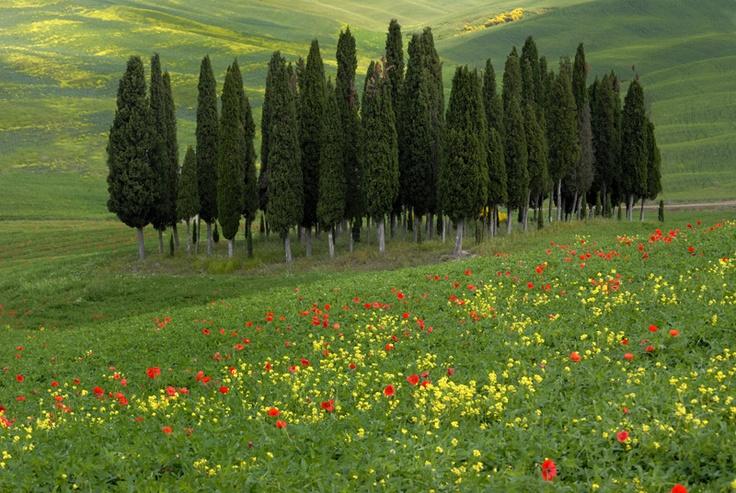 Toscana > San Quirico d'Orcia