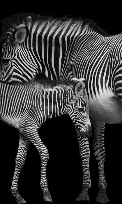 Simply black and white