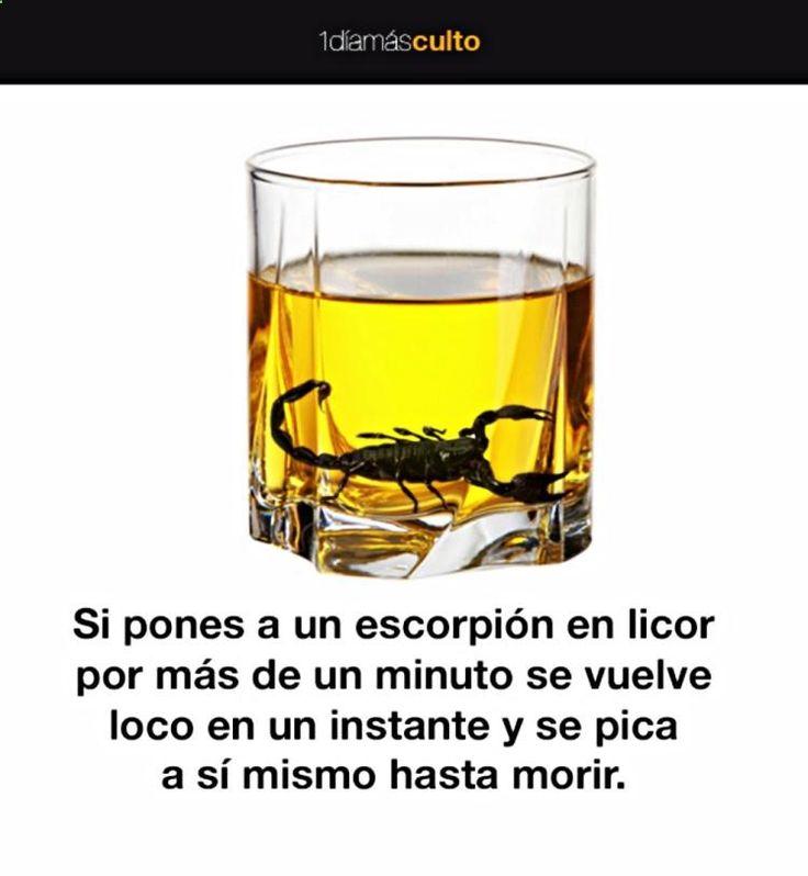 Entérate de Top Noticias Curiosas, Noticias Curiosas De Hoy Para Ninos y Sabias Que Reir  ➡➡➡ http://www.cienic.com/peces-necesitan-beber-agua/