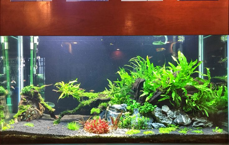 ... on Pinterest Aquascaping, Planted aquarium and Freshwater aquarium