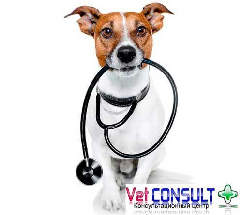 Кардиологический консультационный центр собак и кошек