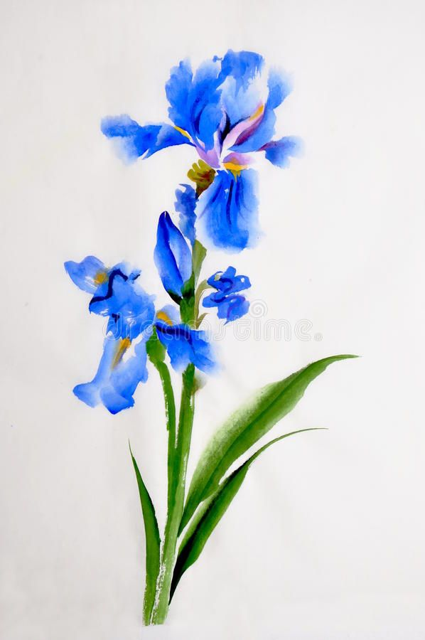 Iris Flower Watercolor Painting Stock Illustration Watercolor Flowers Paintings Iris Flowers Watercolor Flowers