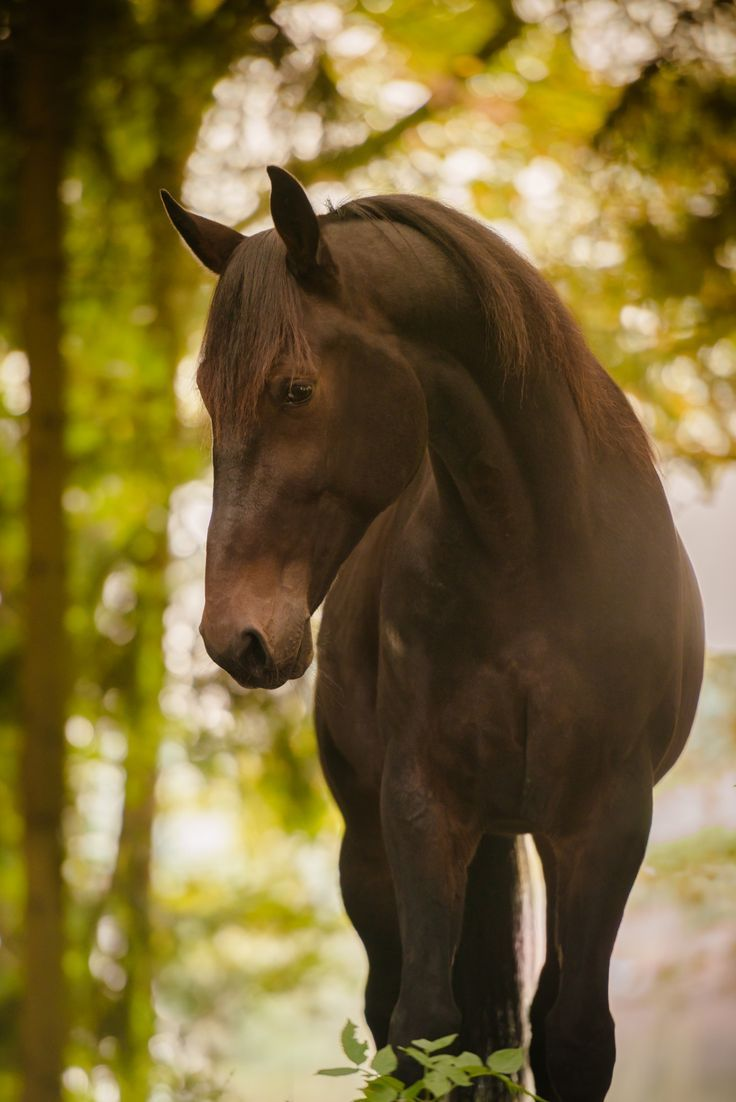 #tiere #animals #horse #pferd