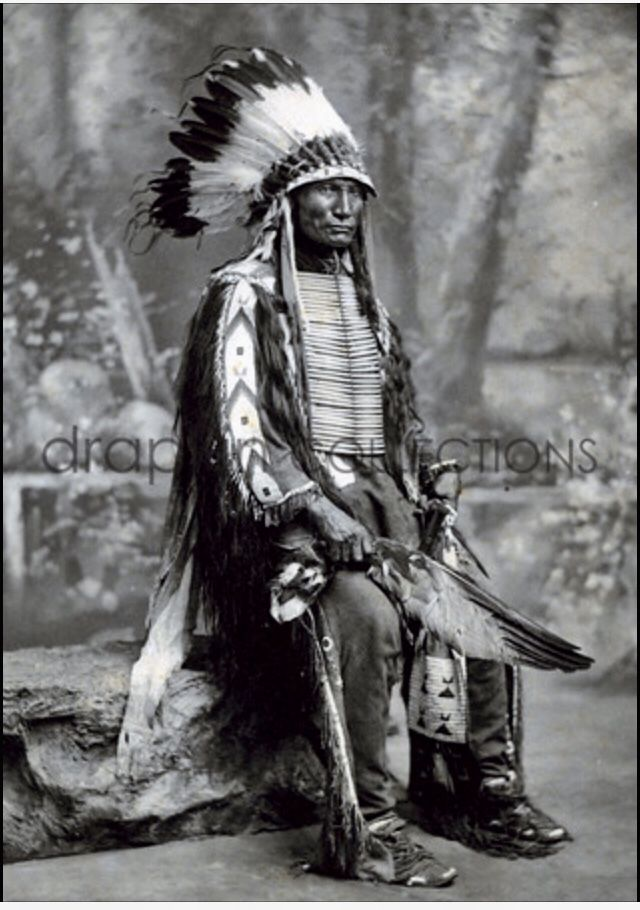 SAULK WARRIOR CHIEF  CIRCLING SUN AKA OLD BLOOD IN GUT'S