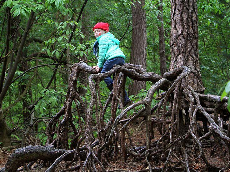 Hou je van klimmen en ravotten? Kom dan naar Kabouterberg, een gezellige plek in het bos met zandheuvels en luchtwortels waar de Kastelse kabouters wo...