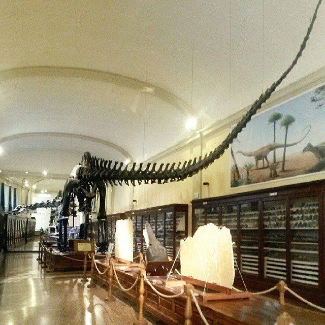 Io @lanuvolettadivivienne (del team @igersbologna ) e il Diplodocus vi auguriamo una buona serata! Con questo scatto si conclude la nostra esperienza come admin, ringraziamo @twiperbole per averci dato la possibilità di condivere con voi il nostro sguardo su Bologna e ringraziamo voi per averci seguite! A presto e in bocca al lupo a chi verrà dopo di noi! Ah se volete vedere questo mastodontico dinosauro lo trovate al Museo Capellini!