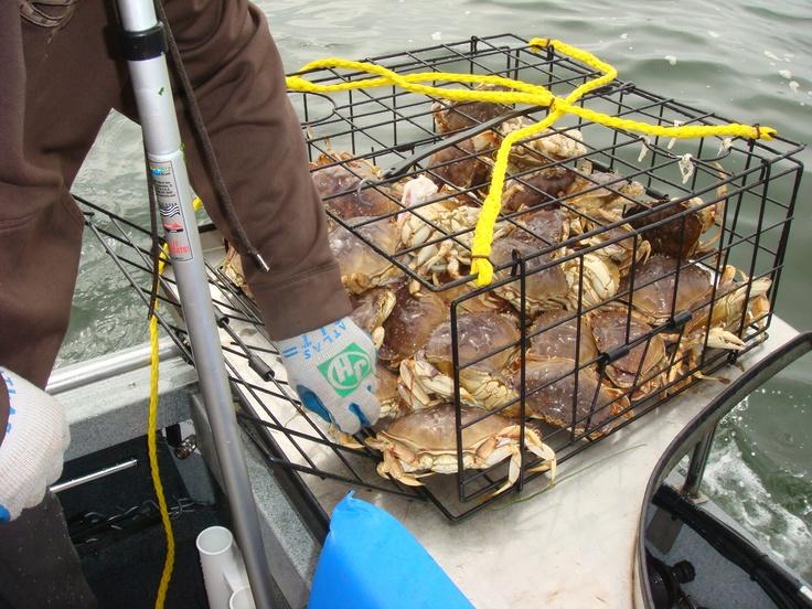 Crabbing. Alsea Bay Waldport.  Oregon Coast.