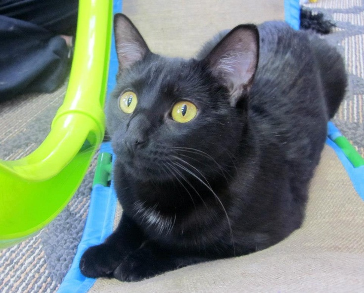 Citrine is a 1 yr old spayed female who came to us