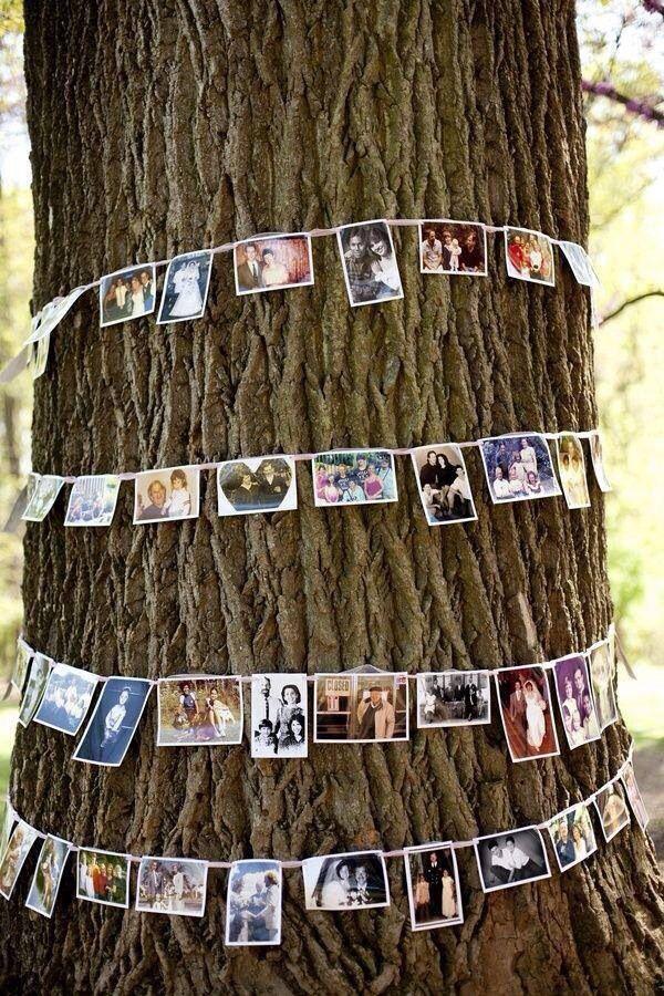 Fotos de los novios alrededor de un árbol  Ideas para bodas al aire libre