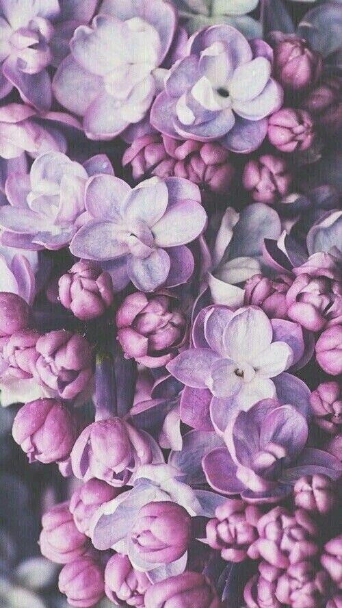 Flower Pink Violet Tumblr Background Wallpapers