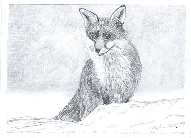 Preparatory drawings. I didn't use the fox in the end but he may appear somewhere else soon