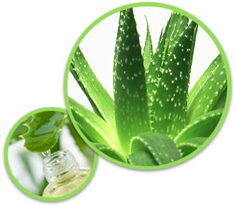 What Is Aloe Vera? Aloe Vera, or 'Aloe Barbadensis Miller' is a green plant that has been utilized in remedies for centuries. It was originally native to northern regions of African, but has spread tremendously across the world due to it's simple ability to cultivate in the most unfriendly environments. The Aloe Vera Juice, which is what most people think …