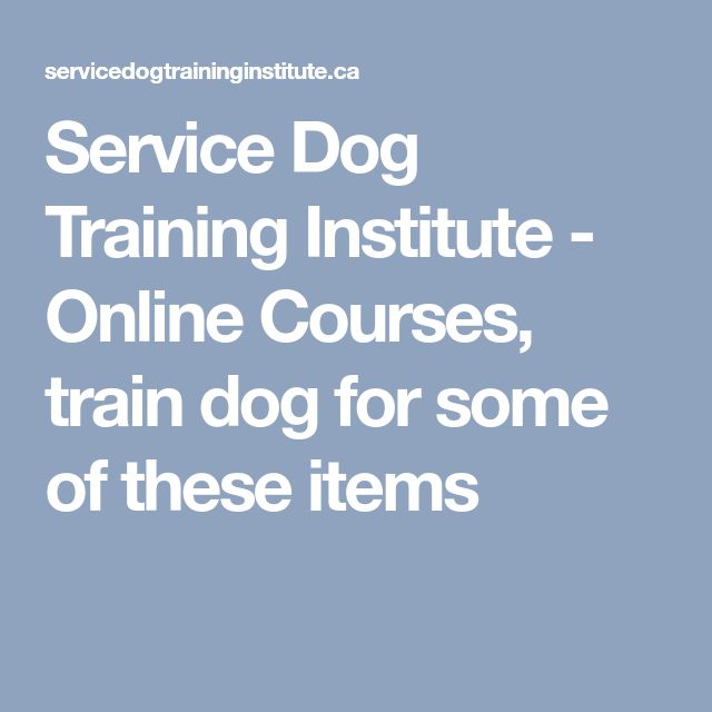 Service Dog Training Institute - Online Courses, train dog for some of these items