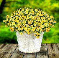 Rodaja de limón Superbells Calibrachoa Petunia semillas de flores anuales, Pack profesional, 100 semillas / paquete