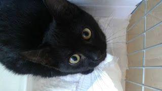 """""""O Grito do Bicho"""": Polícia investiga extermínio de gatos em condomíni..."""