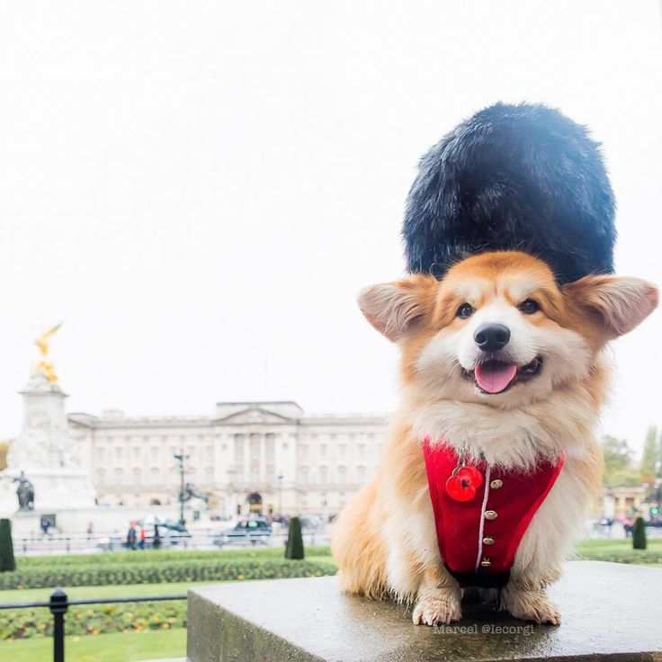 """12 tis. To se mi líbí, 307 komentářů – VisitEngland (@visitengland) na Instagramu: """"Happy Chinese New Year everyone!  Who else is excited to be welcoming the Year of the Dog? …"""""""