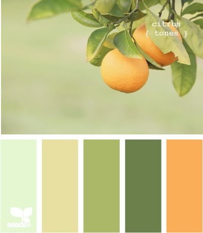 Gorgeous hues around an orange grove... #kitchencolors